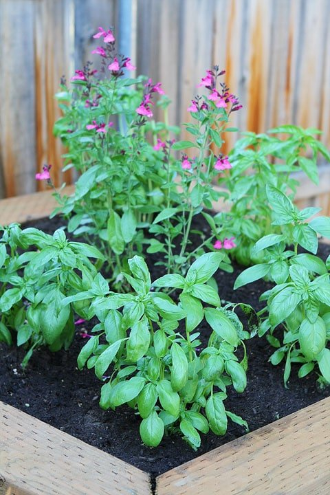 Raised-Herb-Garden-10