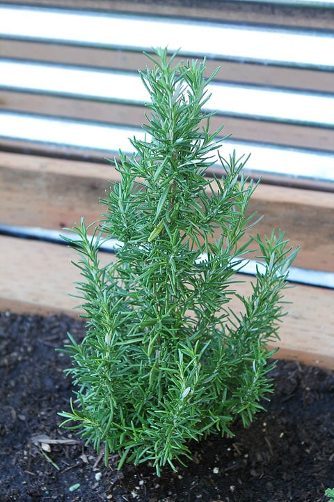 Raised-Herb-Garden-12