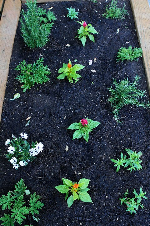 Raised-Herb-Garden-7