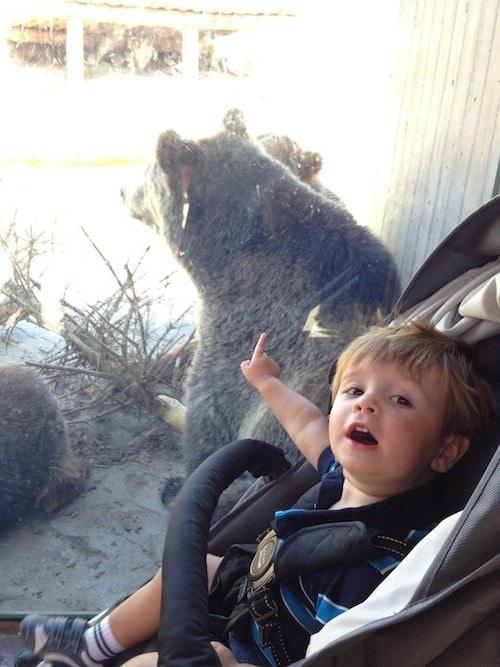 caleb-bears-zoo