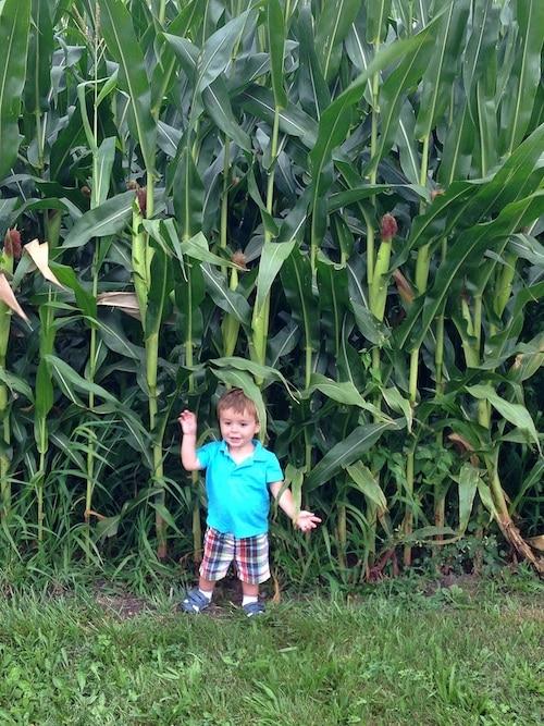 caleb-corn