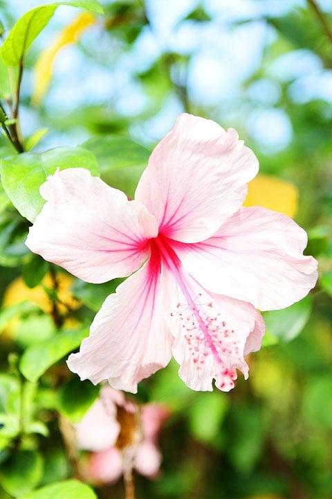 Hawaii-Big-Island-Four-Seasons-Resort-7