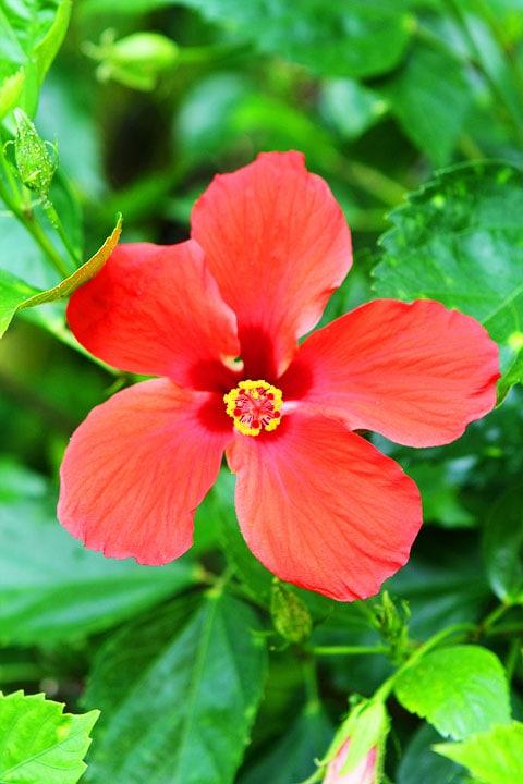 Hawaii-Big-Island-Four-Seasons-Resort-8