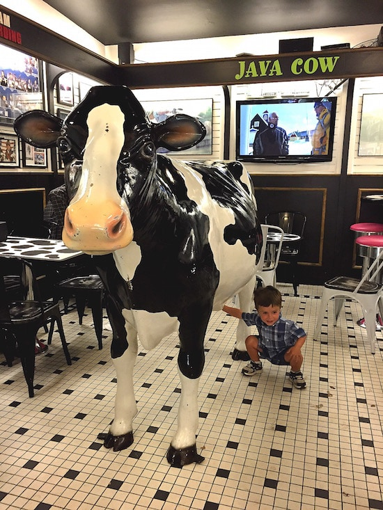 java-cow