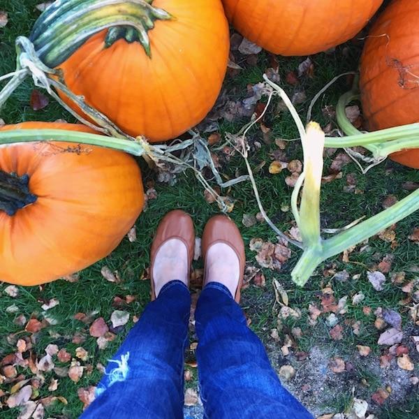 tieks-pumpkins