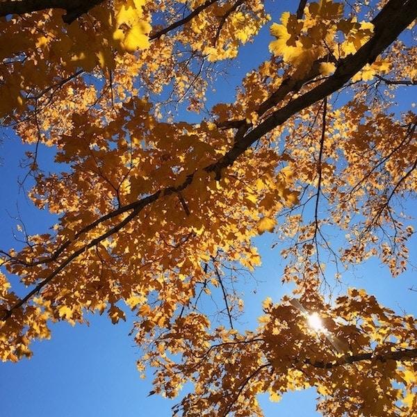 fall-trees