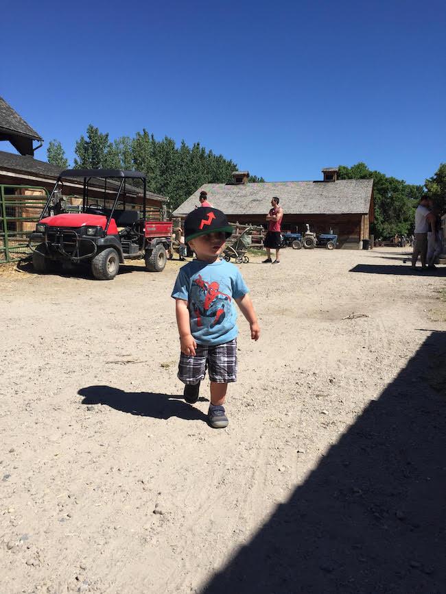 maxwell-wheeler-farm