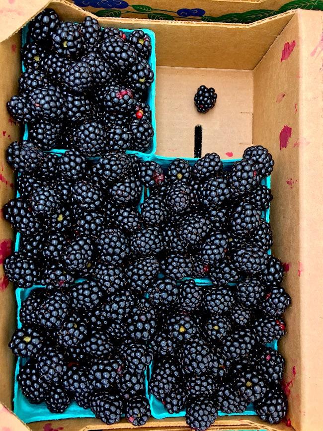 Oregon Blackberries