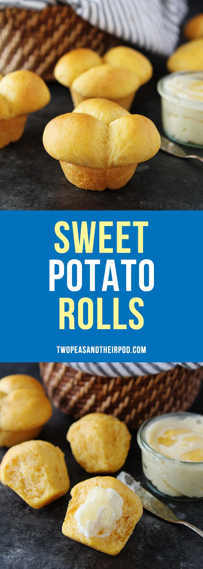 Sweet Potato Rolls are the perfect dinner rolls for Thanksgiving or for any meal! #rolls #sweetpotato #Thanksgiving