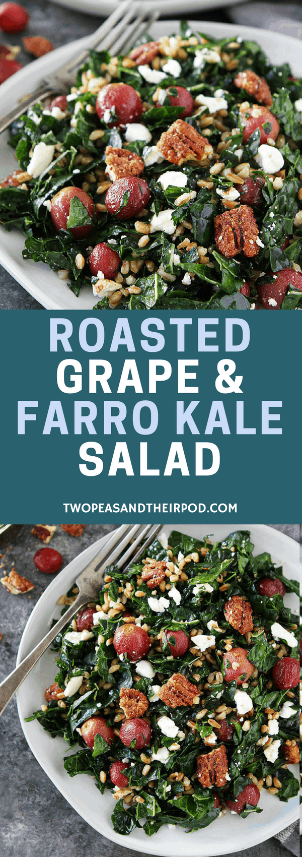 Roasted Grape and Farro Kale Salad with candied pecans, feta cheese, and balsamic dressing is a great salad for lunch or dinner! #salad #vegetarian #farro #kale #kalesalad