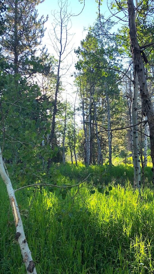 McCall Idaho forest