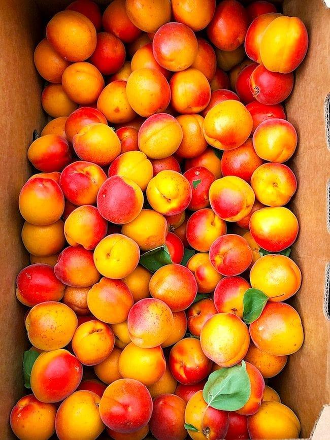 McCall Idaho apricots
